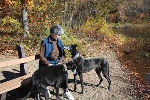 virgina-and-greyhounds
